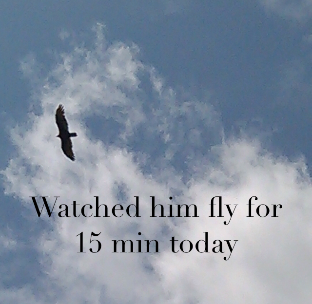 Watched him fly for 15 min today