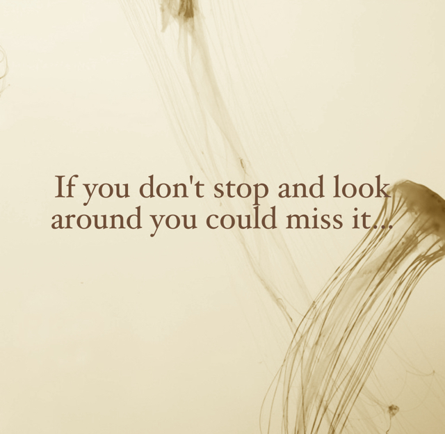 If you don't stop and look around you could miss it...