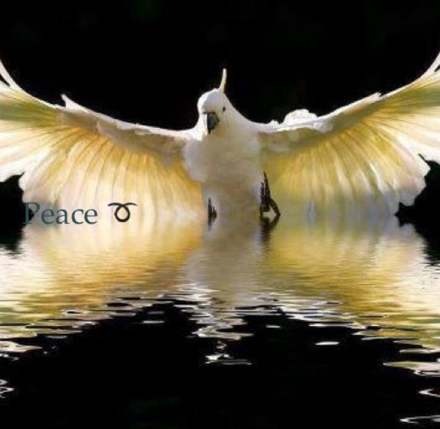 Peace ➰
