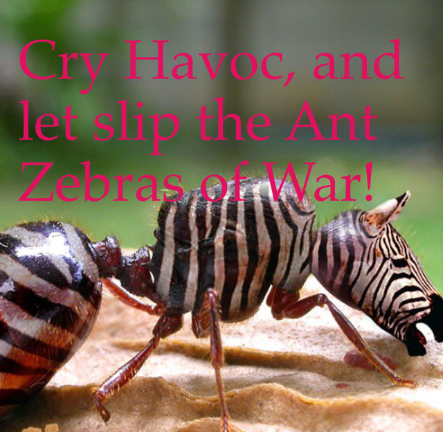 Cry Havoc, and let slip the Ant Zebras of War!