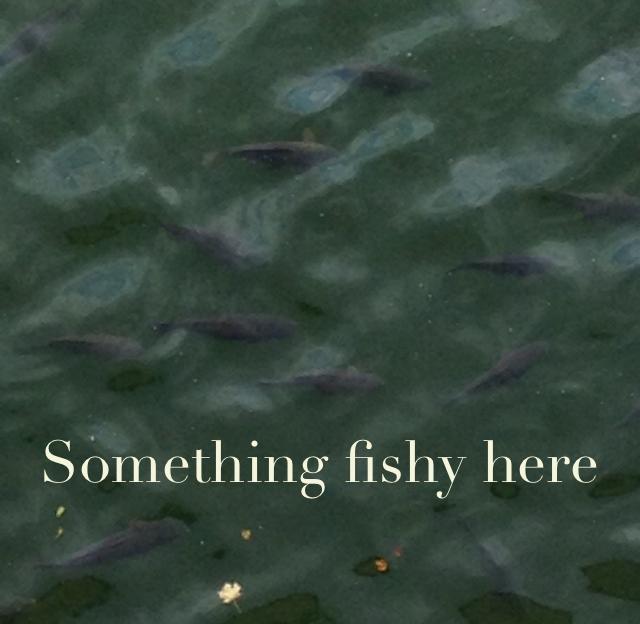 Something fishy here