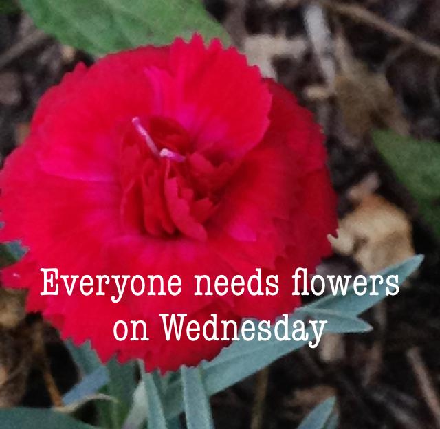 Everyone needs flowers on Wednesday