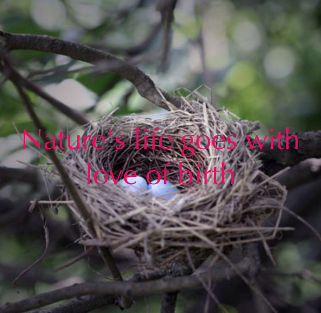 Nature's life goes with love of birth