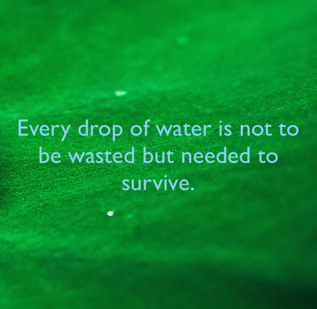 Every drop of water is not to be wasted but needed to survive.