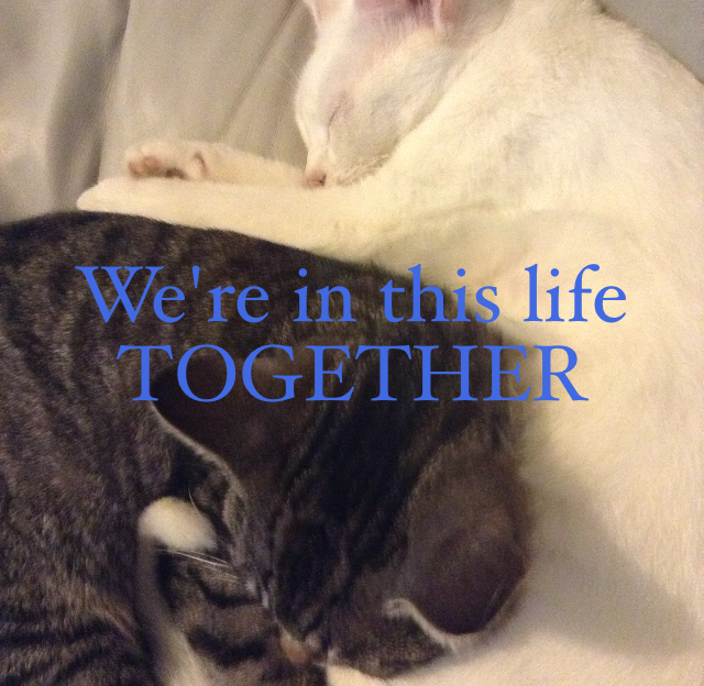 We're in this life TOGETHER
