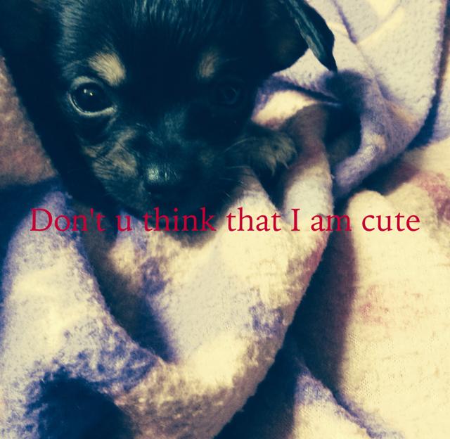 Don't u think that I am cute