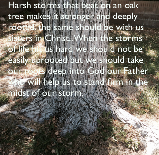 Harsh storms that beat on an oak tree makes it stronger and deeply rooted. the same should be with us sisters in Christ.. When the storms of life hit us hard we should not be easily uprooted but we should take our roots deep into God our Father who will help us to stand firm in the midst of our storm.