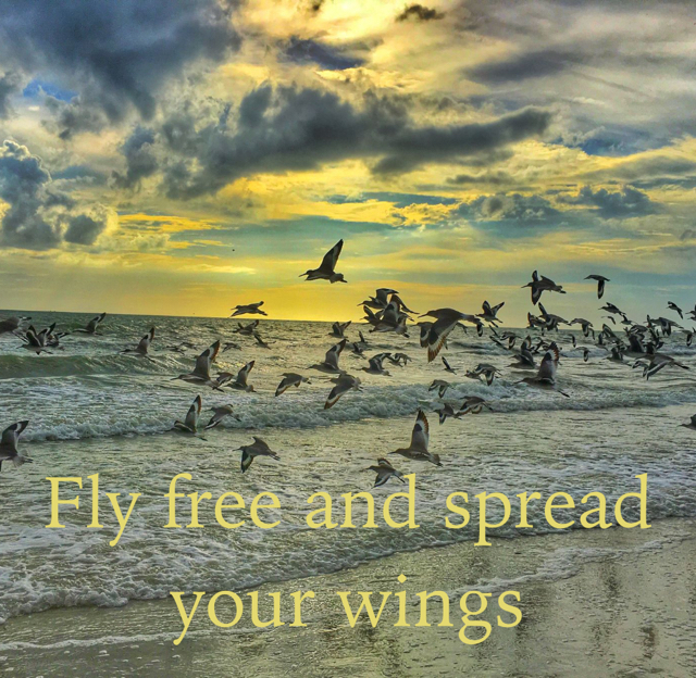 Fly free and spread your wings