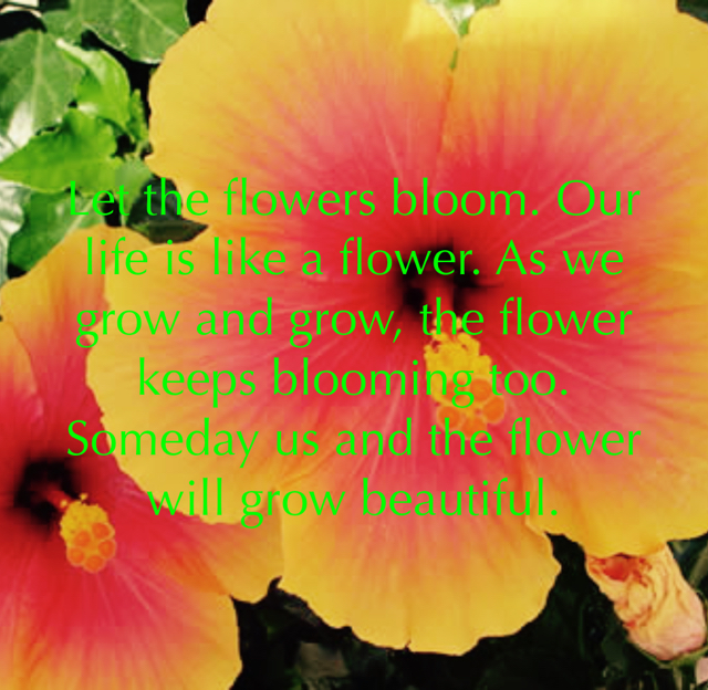 Let the flowers bloom. Our life is like a flower. As we grow and grow, the flower keeps blooming too. Someday us and the flower will grow beautiful.