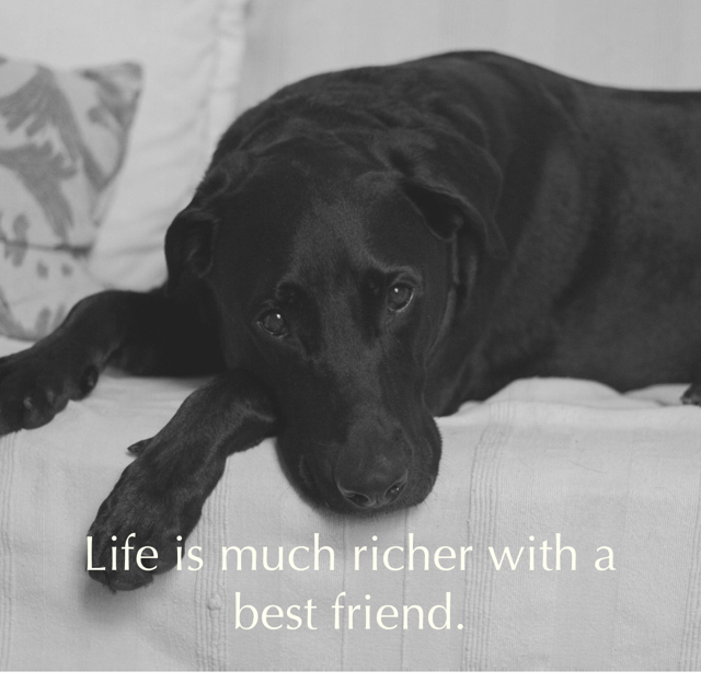 Life is much richer with a best friend.