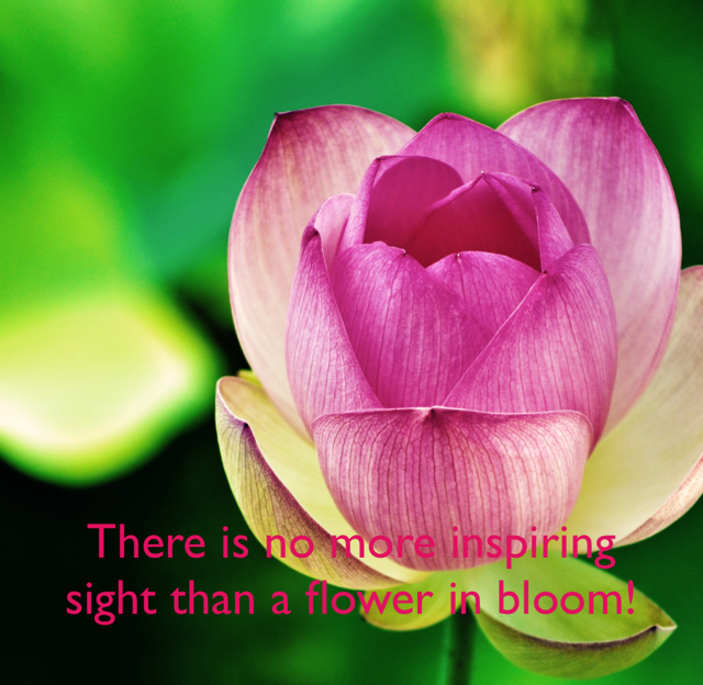 There is no more inspiring sight than a flower in bloom!