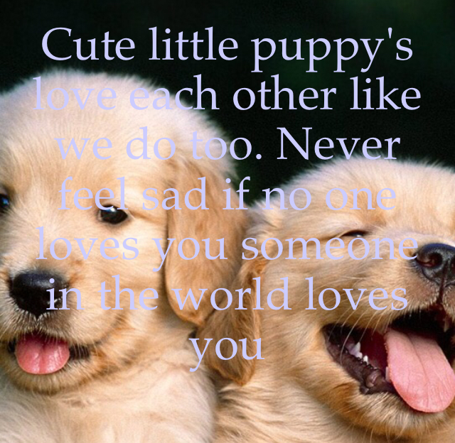 Cute little puppy's love each other like we do too. Never feel sad if no one loves you someone in the world loves you