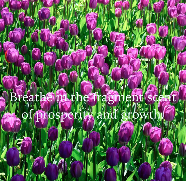 Breathe in the fragment scent of prosperity and growth.