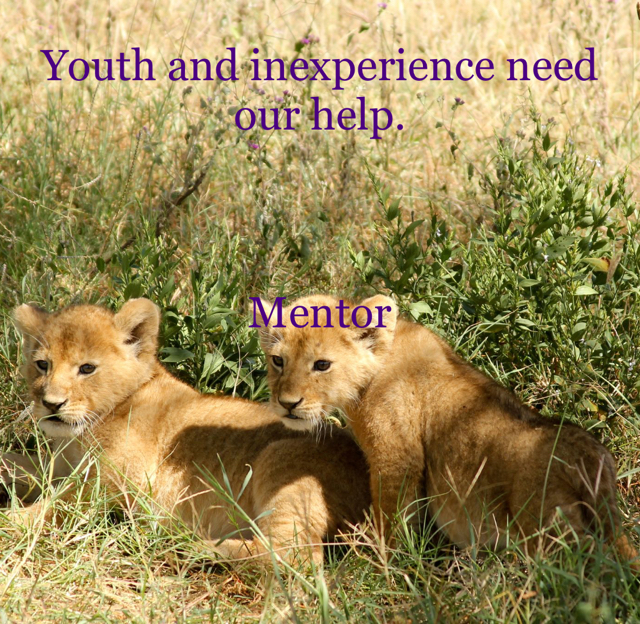 Youth and inexperience need our help. Mentor
