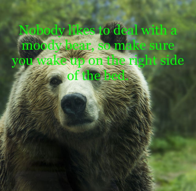 Nobody likes to deal with a moody bear, so make sure you wake up on the right side of the bed.