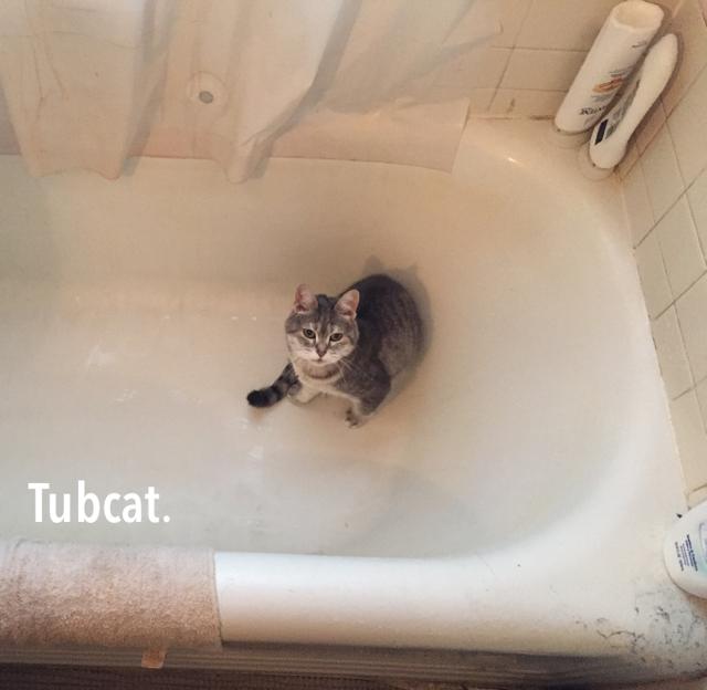 Tubcat.
