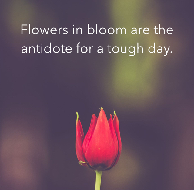 Flowers in bloom are the antidote for a tough day.