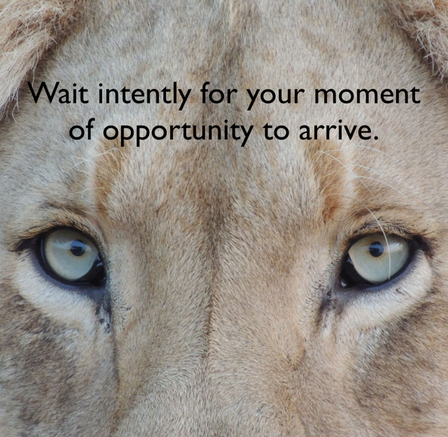 Wait intently for your moment of opportunity to arrive.