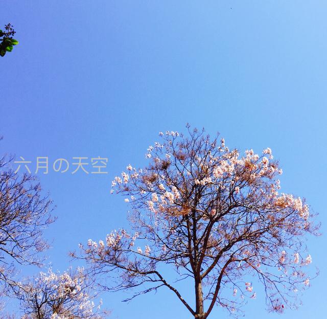六月の天空