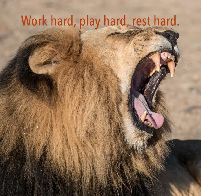 Work hard, play hard, rest hard.