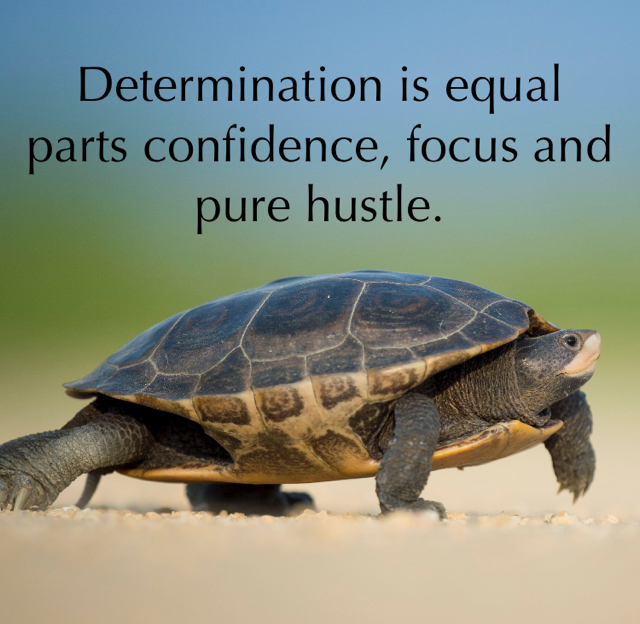 Determination is equal parts confidence, focus and pure hustle.