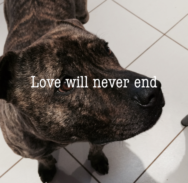 Love will never end