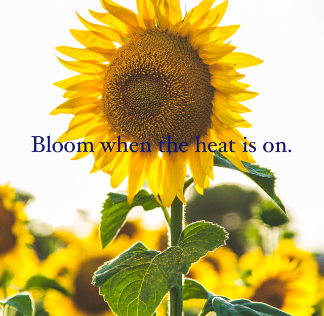 Bloom when the heat is on.
