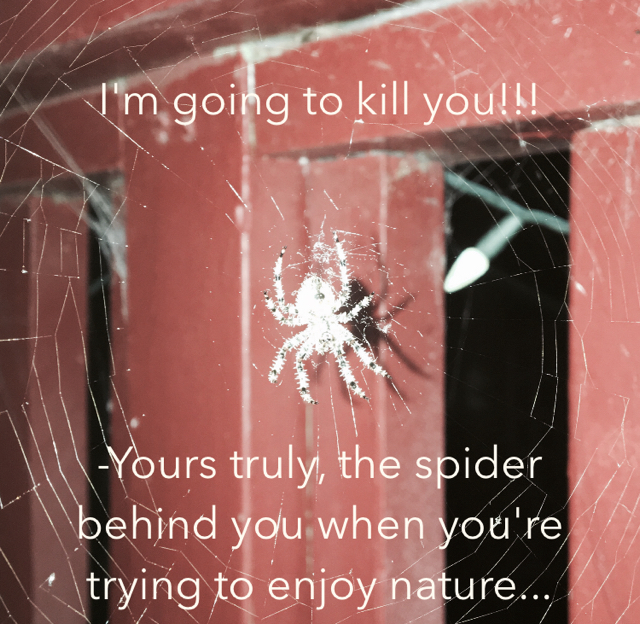 I'm going to kill you!!! -Yours truly, the spider behind you when you're trying to enjoy nature...