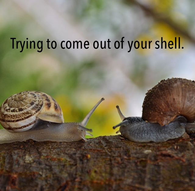 Trying to come out of your shell.