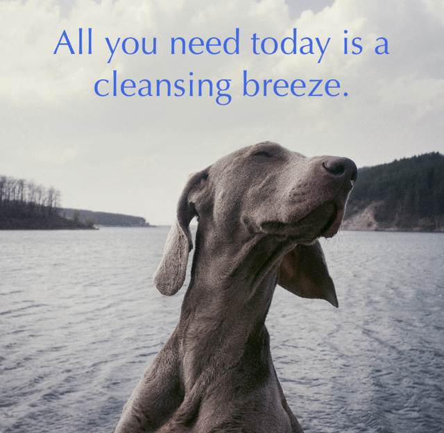 All you need today is a cleansing breeze.