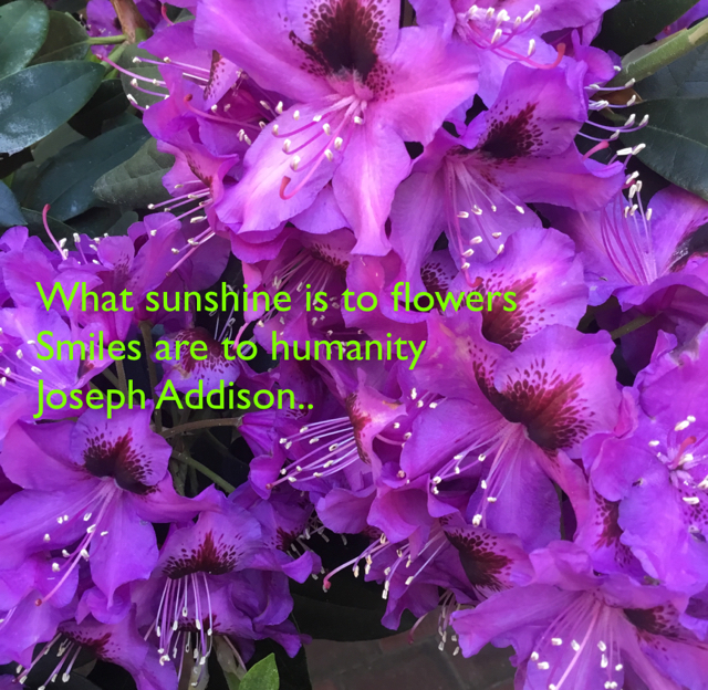 What sunshine is to flowers Smiles are to humanity  Joseph Addison..