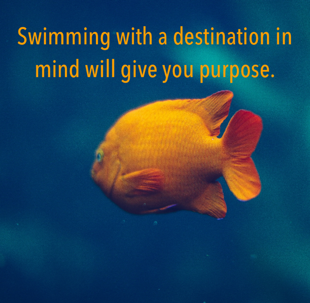 Swimming with a destination in mind will give you purpose.