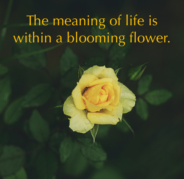 The meaning of life is within a blooming flower.