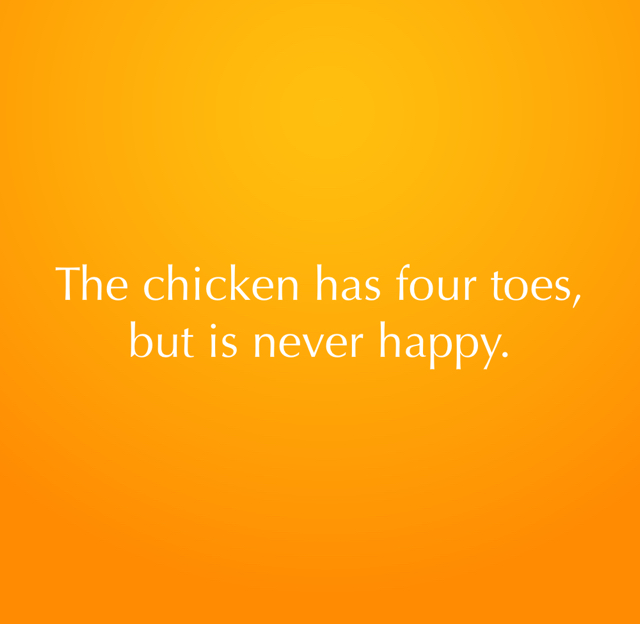 The chicken has four toes, but is never happy.