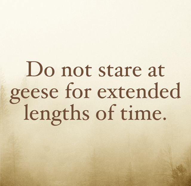 Do not stare at geese for extended lengths of time.