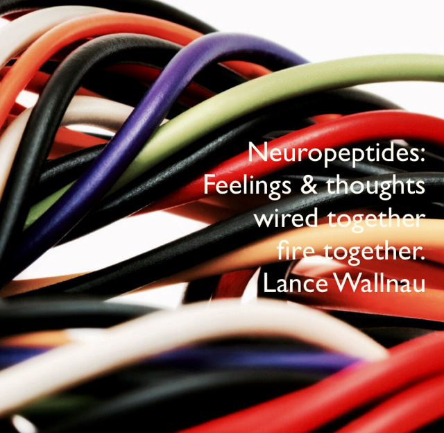 Neuropeptides: Feelings & thoughts  wired together  fire together. Lance Wallnau